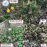 学校の敷地内の植物