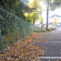落ち葉でいっぱいになりました