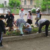 環境委員会 花壇整備