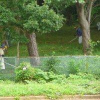 地区社協の皆様による除草作業